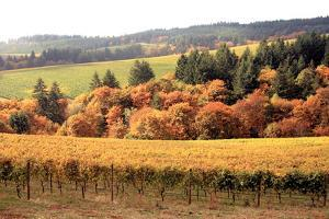 Fall in Wine Country I by Maureen Love