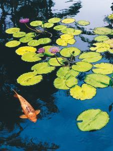 Koi Pond I by Maureen Love