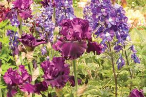 Purple Garden I by Maureen Love