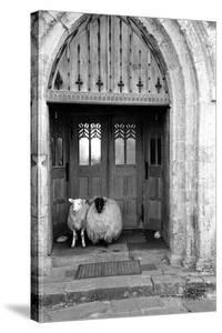 Church Sheep by Maurice Ambler