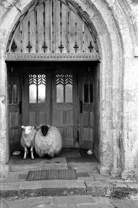 Church Sheep by Maurice Ambler