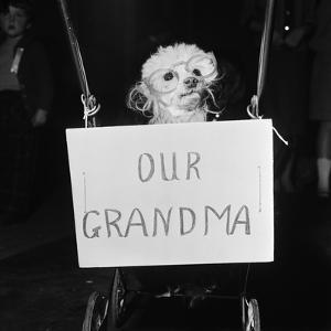 Grandma the Dog at Annual Dogs Christmas Party in Bristol, 1958 by Maurice Tibbles