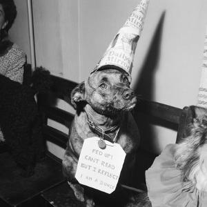 Sally the Dog at Annual Dogs Christmas Party in Bristol, 1958 by Maurice Tibbles