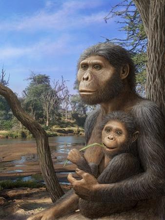 Australopithecus Afarensis, Artwork by Mauricio Anton