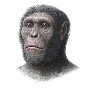 Australopithecus Sediba Head by Mauricio Anton