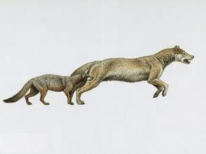 Extinct Dog Ancestors Hesperocyon and Sunkahetanka by Mauricio Anton