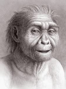 Homo Georgicus by Mauricio Anton