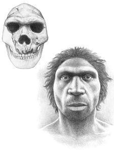 Homo Heidelbergensis Skull And Face by Mauricio Anton