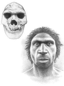 Homo Heidelbergensis Skull And Face by Mauricio Anton