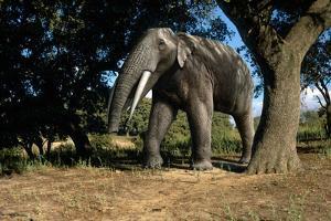 Prehistoric Elephant, Artwork by Mauricio Anton