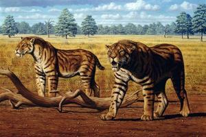 Sabre-toothed Cats, Artwork by Mauricio Anton