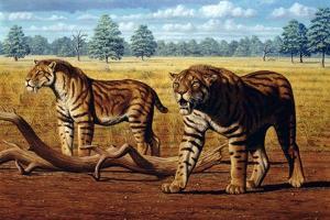 Sabre-toothed Cats, Artwork by Mauricio Anton