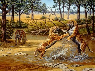 Sabre-toothed Cats Fighting by Mauricio Anton