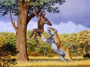 Scimitar Cat Attacking a Hominid by Mauricio Anton