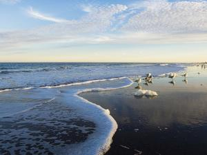 Common Sea Gulls and Surf by Mauricio Handler