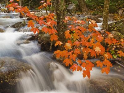 Jordan's Stream Cascades Through a Woodland Near Park Loop Road by Mauricio Handler