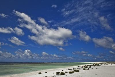 New Vegetation on Deserted Starbuck Island in the Southern Line Islands by Mauricio Handler
