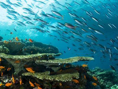 Schooling Fish over a Tropical Coral Reef by Mauricio Handler