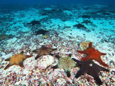 Starfish Off Darwin Island by Mauricio Handler