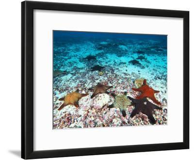 Starfish Off Darwin Island