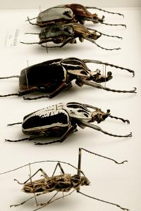 Beetle Collection by Mauro Fermariello