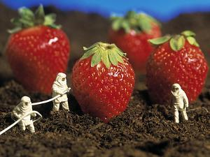 Concept of Genetically Engineered Strawberries by Mauro Fermariello