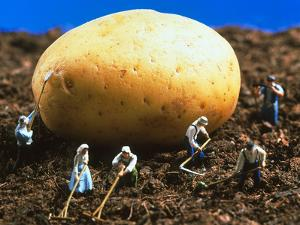 Conceptual Image of Genetically Engineered Potato by Mauro Fermariello