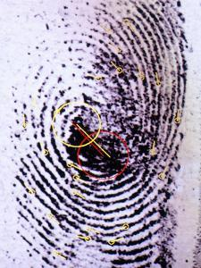 Fingerprint Analysis by Mauro Fermariello
