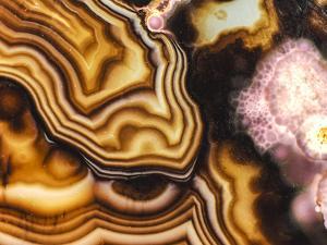 Pink Brown Turritella Agate Pattern by maury75