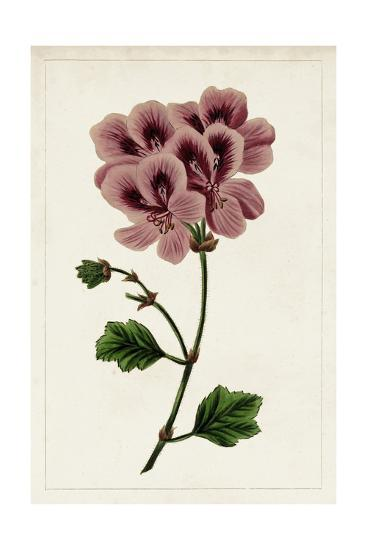 Mauve Botanicals III-0 Unknown-Art Print