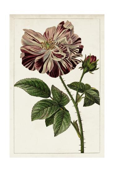 Mauve Botanicals V-0 Unknown-Art Print