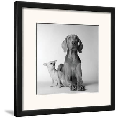 Max and Roxie-Amanda Jones-Framed Art Print