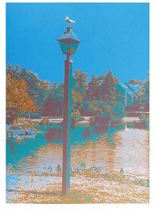 Seagull on a Lantern by Max Epstein