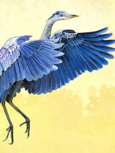 Great Blue Heron by Max Hayslette