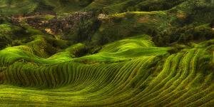 Waves of Rice - the Dragon's Backbone by Max Witjes