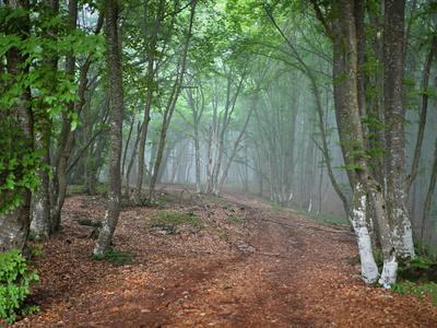 Green Spring Misty Forest. May in Crimea