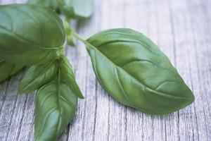 Basil Leaves by Maxine Adcock