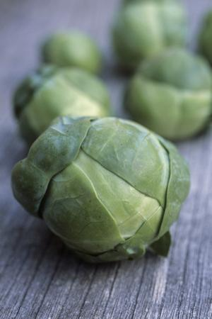 Brussels Sprouts (Brassica Oleracea) by Maxine Adcock