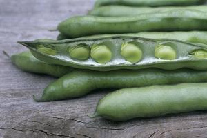 Organic Broad Beans (Vicia Faba) by Maxine Adcock