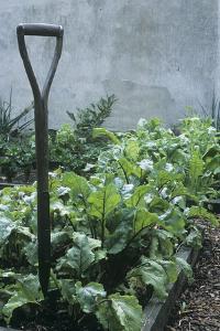 Organic Vegetable Garden by Maxine Adcock