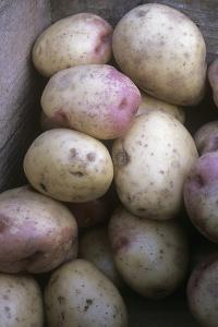 Potatoes (Solanum 'King Edward') by Maxine Adcock