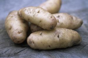 Potatoes (Solanum Tuberosum 'Anya') by Maxine Adcock