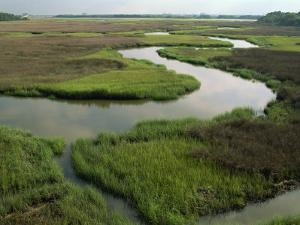 Wetlands of the Cooper River, North Charleston Area, South Carolina, USA by Maxwell Duncan