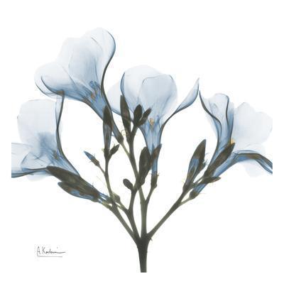 https://imgc.artprintimages.com/img/print/may-flowers_u-l-f5488q0.jpg?p=0