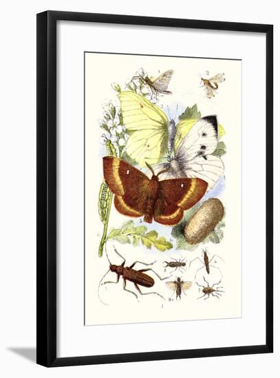 May-Fly, Brimstone Butterfly, Musk Beetle, Nut Weevil-James Sowerby-Framed Art Print