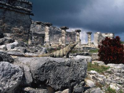 Mayan Ruins, Tulum, Mexico-Angelo Cavalli-Photographic Print
