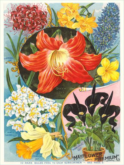 Mayflower Seed Packet-Found Image Press-Art Print