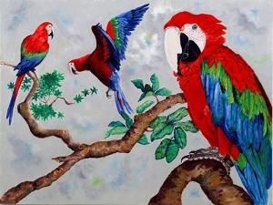 Macaws, 2006 by Maylee Christie