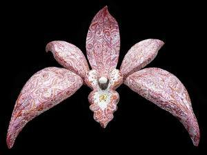 Orchid, 2011 by Maylee Christie