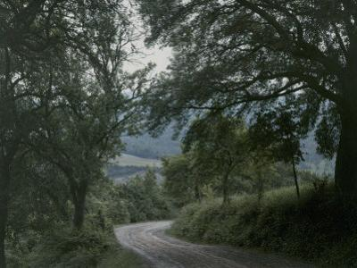 Dirt Road Winds Past Trees